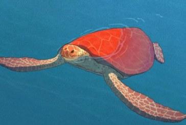 La Tartaruga Rossa: recensione e anteprima