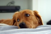 """""""Caro umano, perché?"""": lettera di un cane abbandonato"""